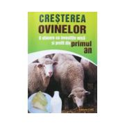 Cresterea ovinelor. O afacere cu investitie mica si profit din primul an